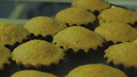 Ready-made cakes. Ready-made pastry, confectioner work HD stock video footage