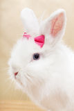 Ready for my closeup - cute bunny portrait Royalty Free Stock Image