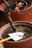 Ready per fare il giardinaggio Immagini Stock