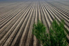 Ready for Planting. The soil has been prepared for planting at a farm in California Stock Image