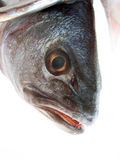 READY TO COOK. Umbra is very tasty fish Royalty Free Stock Image
