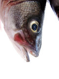 READY TO COOK. Sea bass is very tasty fish Royalty Free Stock Image