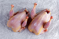 Ready to cook raw seasoned partridges on crumpled paper. Ready to cook raw seasoned partridges on crumpled paper Royalty Free Stock Images