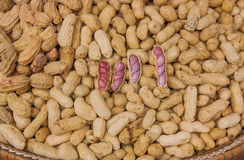 Ready to eat boiled peanuts. Stock Images