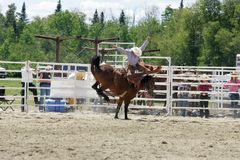 Ready to fall. Cowboy being thrown from horse at local rodeo event Royalty Free Stock Photo