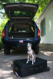 Ready to Go - Dog on a Suitcase Royalty Free Stock Photo