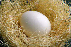 Ready to hatch Royalty Free Stock Photography