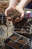Ready to Plant Seedlings in Spring Stock Photo