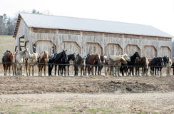 Ready to Ride. Horses at a riding stable are saddled and ready for riders Stock Image