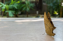 Ready to Start Concept, Back of Butterfly in Leaf Shape under Shadow of Big Tree in The Park Royalty Free Stock Photography