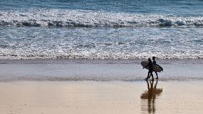 Ready to surf. Pair of surfers walking on the beach ready to surf Royalty Free Stock Photo