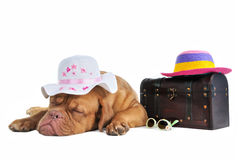 Ready for Vacation Royalty Free Stock Photos