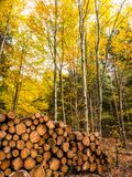 Ready for winter - wood pile in the Black Forest royalty free stock images