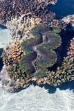 Reaf di corallo Fotografia Stock Libera da Diritti
