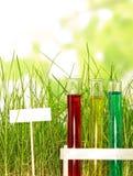 Reageerbuizen met gekleurde vloeistoffen in gras op abstracte groen Stock Foto's