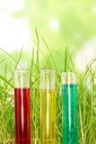 Reageerbuizen met gekleurde vloeistoffen in tgrass op abstracte groen Royalty-vrije Stock Foto's