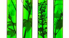 Reageerbuizen met groene vloeistoffen en wijnstok stock video