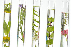 Reageerbuizenoplossing van geneeskrachtige installaties en bloemen - Royalty-vrije Stock Foto's