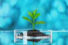 Reagenzglas mit Anlagen lizenzfreie stockfotografie