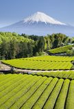 reaguje na zielonej herbaty v Fotografia Stock