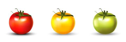 Realístico 3d ajustado do tomate isolado no branco Foto de Stock
