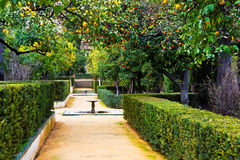 Real Alcazar Gardens in Seville Spain. Real Alcazar Gardens, decorated with lemons and oranges, in Seville Spain Royalty Free Stock Photography