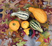 Real autumn gourds plus leaves and acorn decorations on rustic w Royalty Free Stock Photo