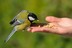A real bird in the hand Royalty Free Stock Photo
