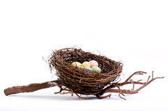 Real Bird's Nest in Studio Stock Images