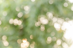 Real bokeh from nature Royalty Free Stock Image
