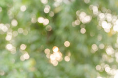 Real bokeh from nature Stock Image