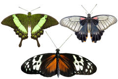 Real butterflies separate on white background - set 01. Close up royalty free stock photography