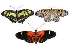 Real butterflies separate on white background - set 02 Royalty Free Stock Images