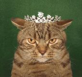 The real cat king. royalty free stock photography