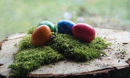 Real colorful Easter eggs at green real moos in front of window. Glass with garden view design Stock Images
