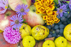 Real colors of autumn Royalty Free Stock Photos