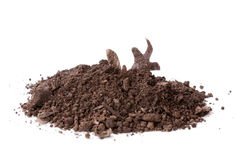 Free Real Compost Pile Stock Images - 22388134
