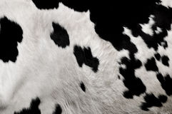 Real cowhide Royalty Free Stock Photography