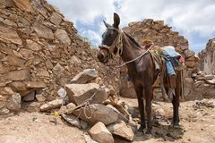 Saddled horse in Real de Catorce Mexico. Real de Catorce, Mexico: horse back tours around the abandoned silver mining town are popular with the tourists Royalty Free Stock Images