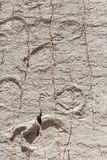 Real dinosaur footprint imprinted in the rock. Nacional Park in Sucre, Bolivia Stock Image
