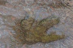 Real dinosaur footprint inThailand. Stock Photo