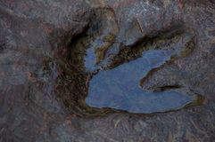 Real dinosaur footprint in Thailand. Royalty Free Stock Image