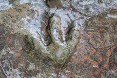Real dinosaur footprint , Thailand. Stock Image