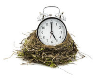 Real empty bird nest with clock Royalty Free Stock Photo