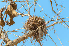 Real empty bird nest on dry tree Stock Image
