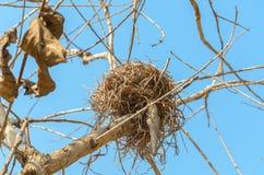 Real empty bird nest on dry tree Stock Image