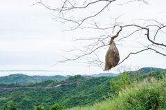 Real empty bird nest mountain view. Real empty bird nest on branch mountain view Stock Image