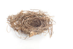 Real empty bird nest on white Stock Images