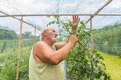 Real farmer in his own home garden Royalty Free Stock Photo