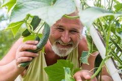 Real farmer in his own home garden. Real senior farmer in his home garden checking the vegetables Stock Photos